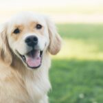 Personal Injury: State of California Dog Bite Laws